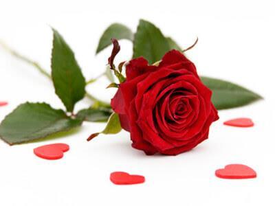 eine rote Rose günstig in einem Blumengeschäft erhältlich