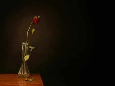 Eine verwelkte Rose gibt Anlass, neue Blumen aus dem Blumengeschäft zu besorgen.
