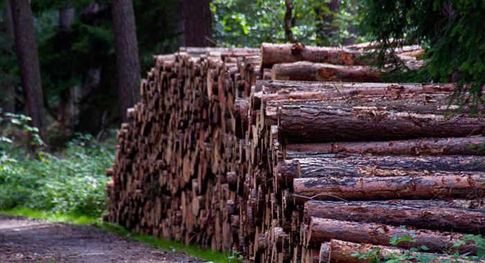 Holzhaufen Hessen