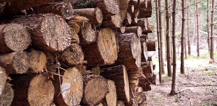 Stammholz-Haufen