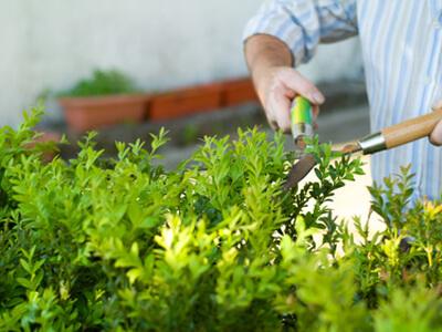 Für den richtigen Heckenverschnitt ist der Gärtner ein Fachmann.
