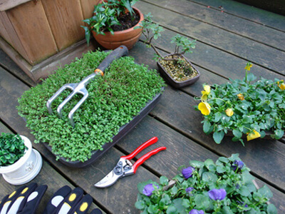 An Balkonpflanzen üben Gärtner in der Ausbildung häufig.