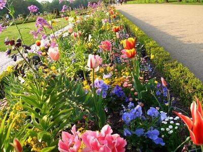 Der Gärtner kennt sich mit verschiedenen Blumenarten und deren Pflege genau aus.
