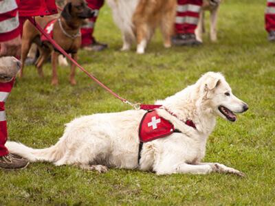 Günstige Hundetrainer trainieren die verschiedensten Hunde.