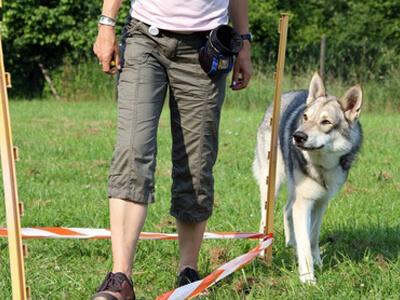 Die Hundeerziehung in der Hundeschule erweist sich als erfolgreich.