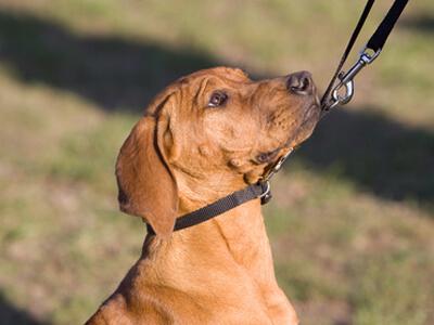 Ein Hund wird in einer Hundeschule dressiert.