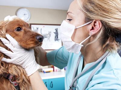Ein Hund wird in einer Tierklinik behandelt.
