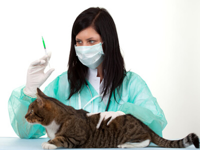 In einer Tierklinik bekommt eine Katze eine Impfung.