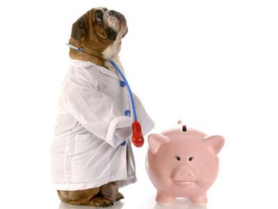 Ein Hund wurde als Tierarzt verkleidet.