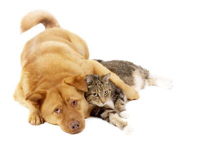 Zoohandlung / Tierhandlung