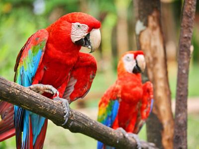 In einer Tierhandlung kann man zwei Papageien günstig erwerben.
