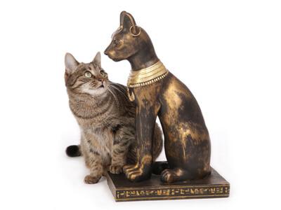 Eine Katze bewundert in der Zoohandlung eine künstliche Katzenfigur.